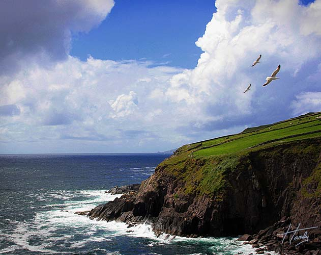 Dingle Coast Birds_Blue Enhanced_RTP_27 Nov 13_SFW