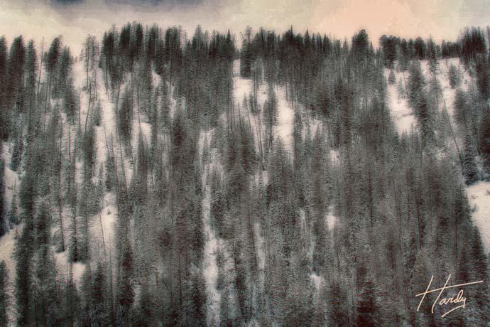 IMG_9180  Trees 1 _ RTP_Nik Filter 2 _ SFW