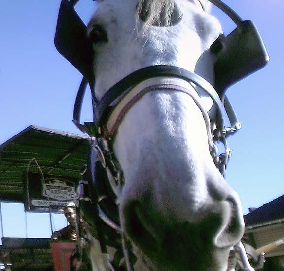 Horse _ 8x8 _ RTP _ SFW