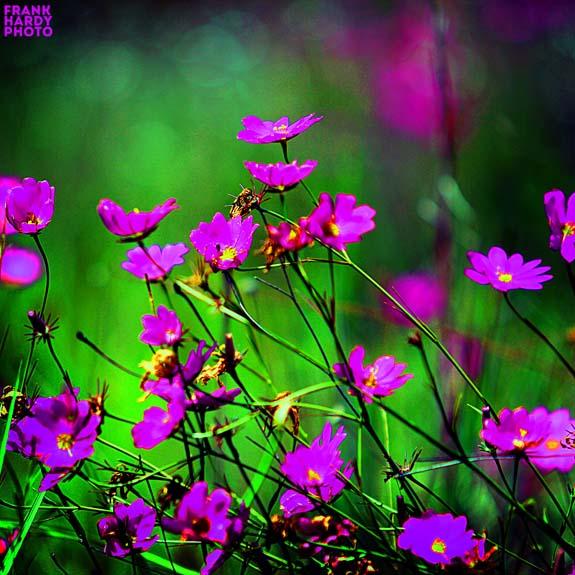 IMG_5282  Flowers_ 5x5_24 Aug 15 _ SFW