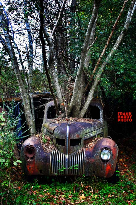 IMG_0087  Car with Trees _ RTP _ 6 Nov 15 _ SFW