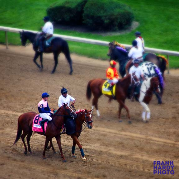 IMG_0029  Horses with Walkers 1 _Blur _ 5x5_11 May 16 _SFW